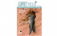 The cover of the first edition of Life Cycle
