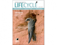 Life Cycle Spring 2015
