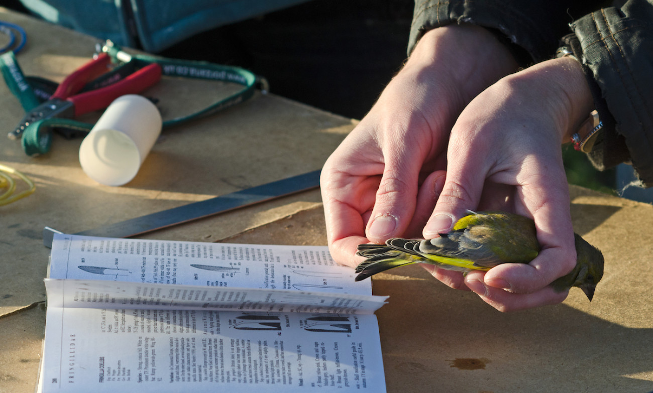 Students bird ringing. David Tipling