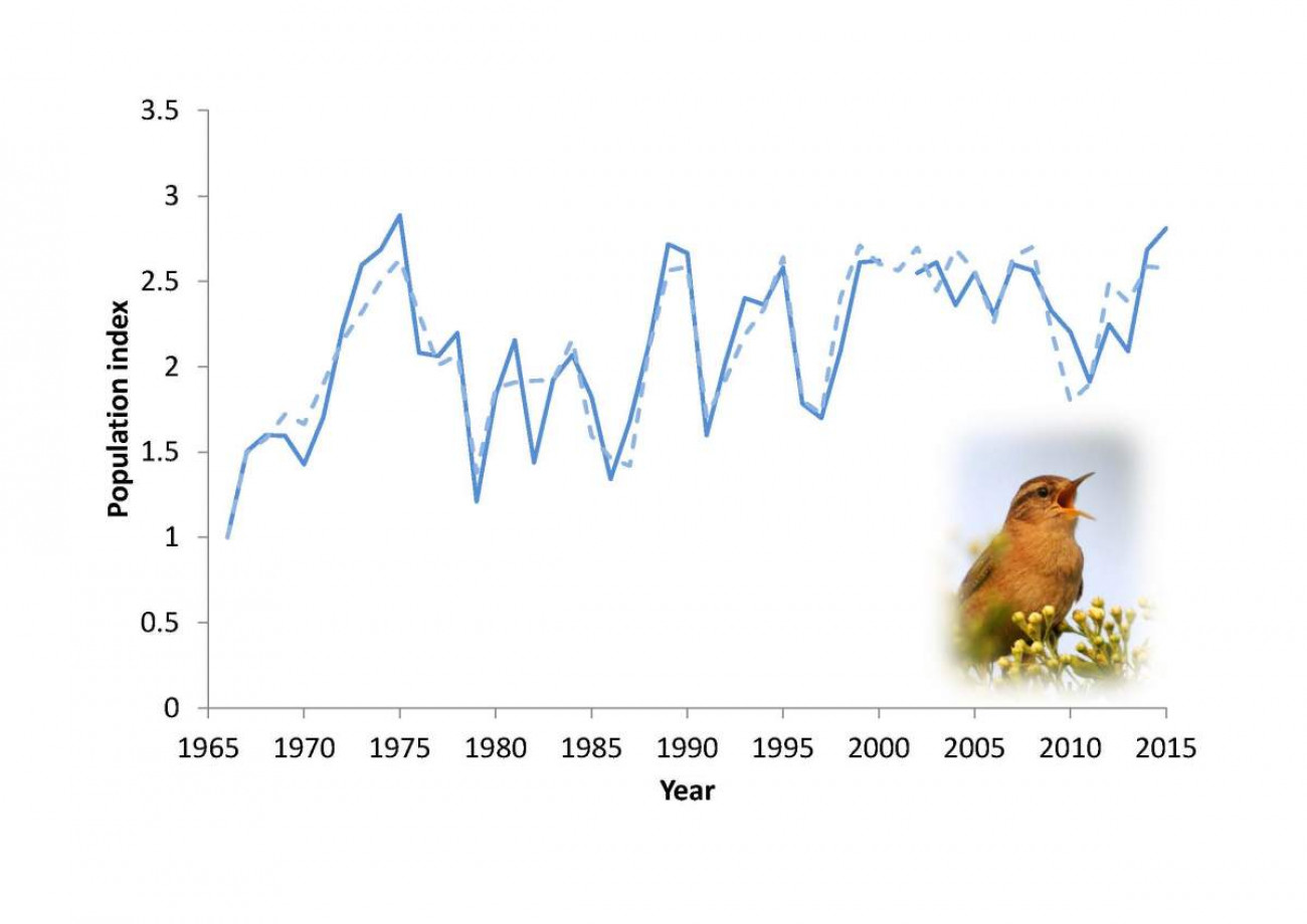 Wren numbers over time.