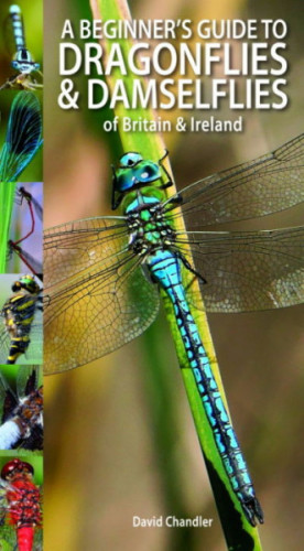 A Beginners Guide to Dragonflies and Damselflies (cover)