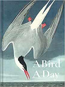 A Bird A Day (cover)
