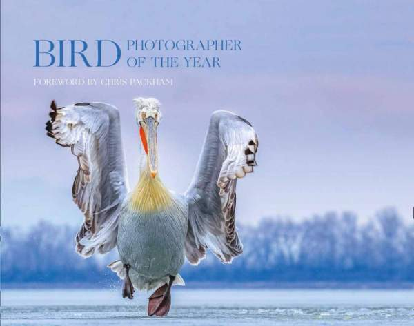 Bird Photographer of the Year 4 (cover)