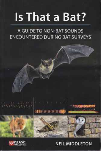 Is That A Bat (cover)