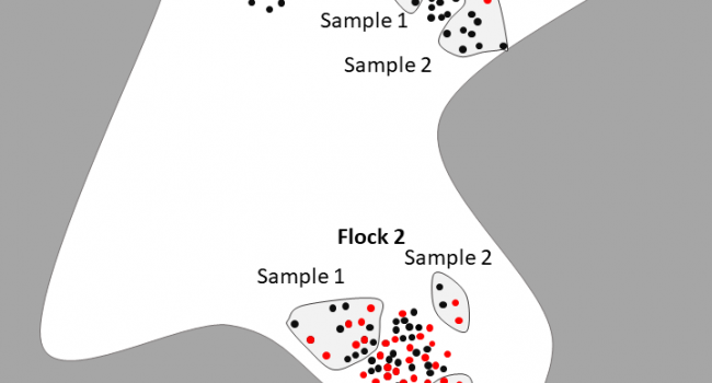 Diagram of waterbird flock composition