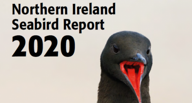 Northern Ireland Seabird Report 2020 cover