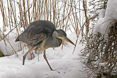 Heron by John Flowerday