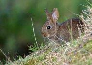 Rabbit by John Harding