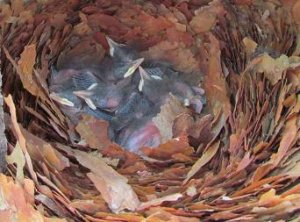 Nuthatch Nest. Photograph by Charlie Howe
