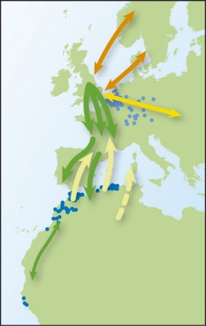 Blackcap movements (from Time to Fly)