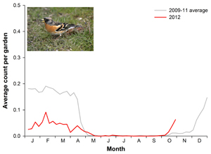 Brambling graph (photo, John Harding)