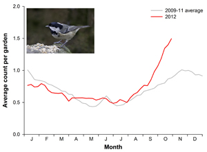 Coal Tit graph (photo, John Harding)