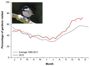 Coal Tit graph