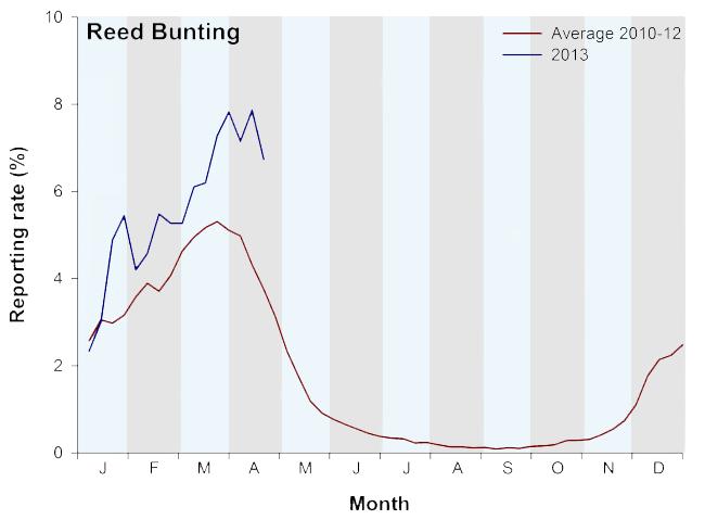 Reed Bunting Garden BirdWatch graph
