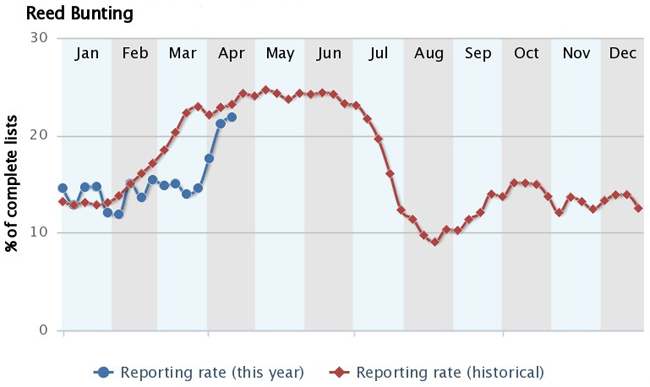 Reed Bunting BirdTrack graph