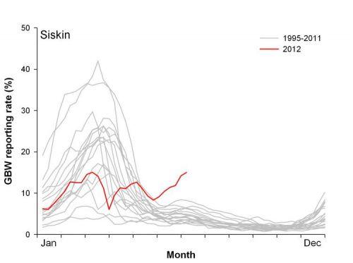 GBW Siskin trend