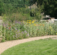 Border at the BTO Nunnery Garden