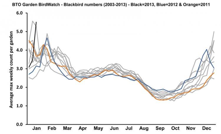 BTO Garden BirdWatch - Average weekly count of Blackbirds in gardens
