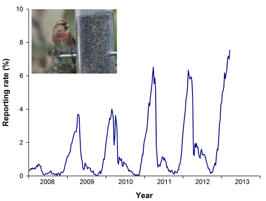Lesser Redpoll graph (photo by Mike Gough)