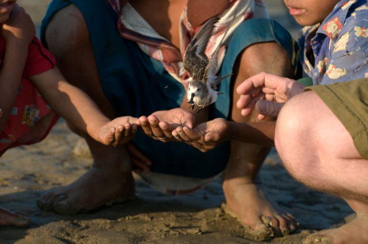 Spoon-billed Sandpiper (Rob Robinson)