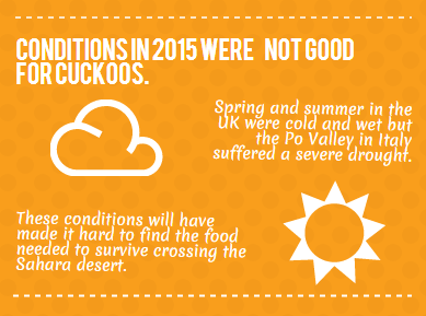 Conditions in 2015 were not good for Cuckoos
