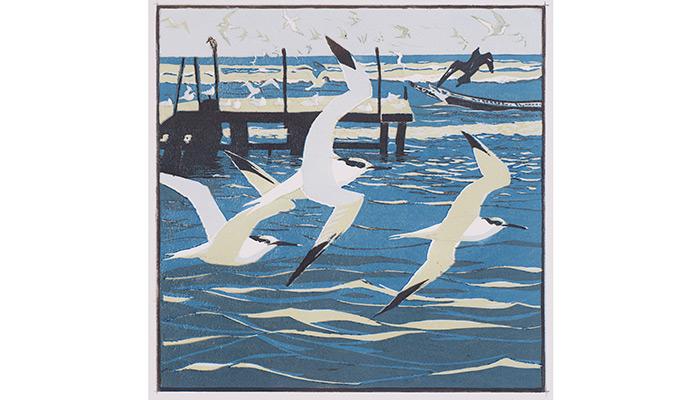 Sandwich Tern. Robert Greenhalf