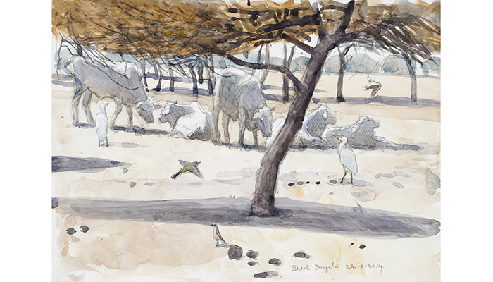 Cattle and Egrets. Robert Greenhalf