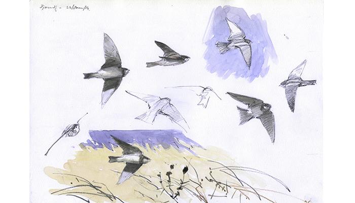 Sand Martins. Bruce Pearson