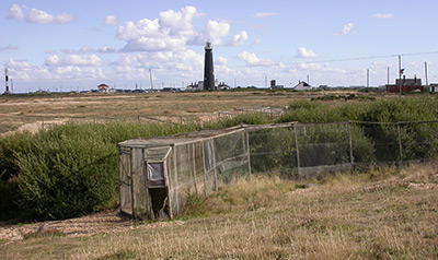 Heligoland trap at Dungeness. Photograph by Mike Toms