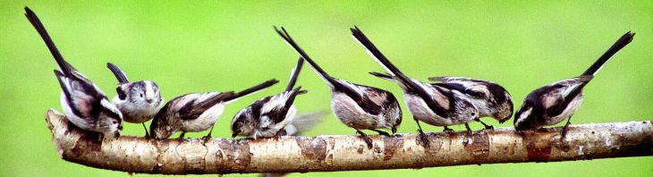 Long-tailed Tit by Dick Jeeves