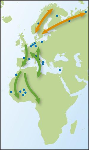 Ruff map