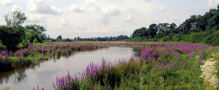 Nunnery Lakes Reserve