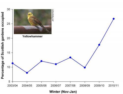 Yellowhammer Graph