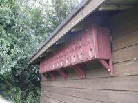 House Sparrow Terrace by Tony Jenkins