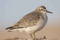 Knot by Mike Dawson/BTO
