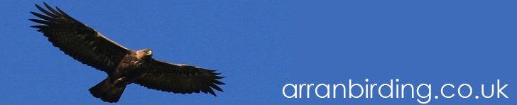 Arran Birding