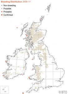 Manx Shearwater breeding distribution 2008-11