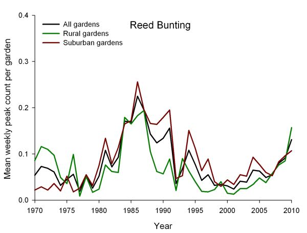 GBFS mean weekly peak count per garden for Reed Bunting