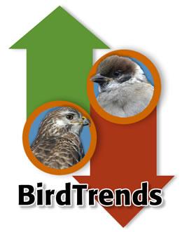 BirdTrends Report